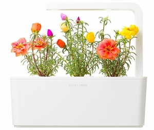Click and Grow Moss Rose Refill -(3pcs)