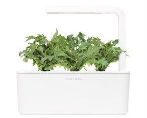 Click and Grow Leaf Mustard Refill-(3 pcs)