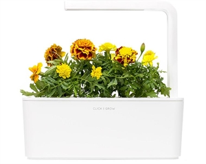 Click and Grow French Marigold Refill-3(pcs)