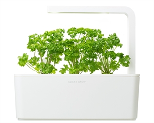 Click and Grow Parsley Refill-3(pcs)