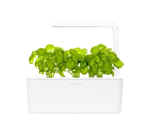 Click and Grow Genovese Basil Refill-3(pcs)