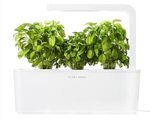 Click and Grow Dwarf Basil Refill-3(pcs)