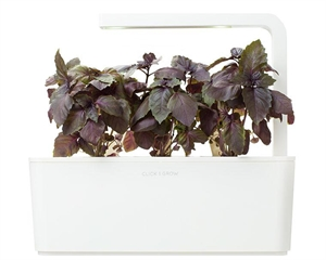 Click and Grow Red Basil Refill-3(pcs)