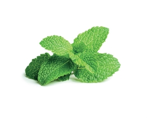 Click and Grow Peppermint Refill-3(pcs)